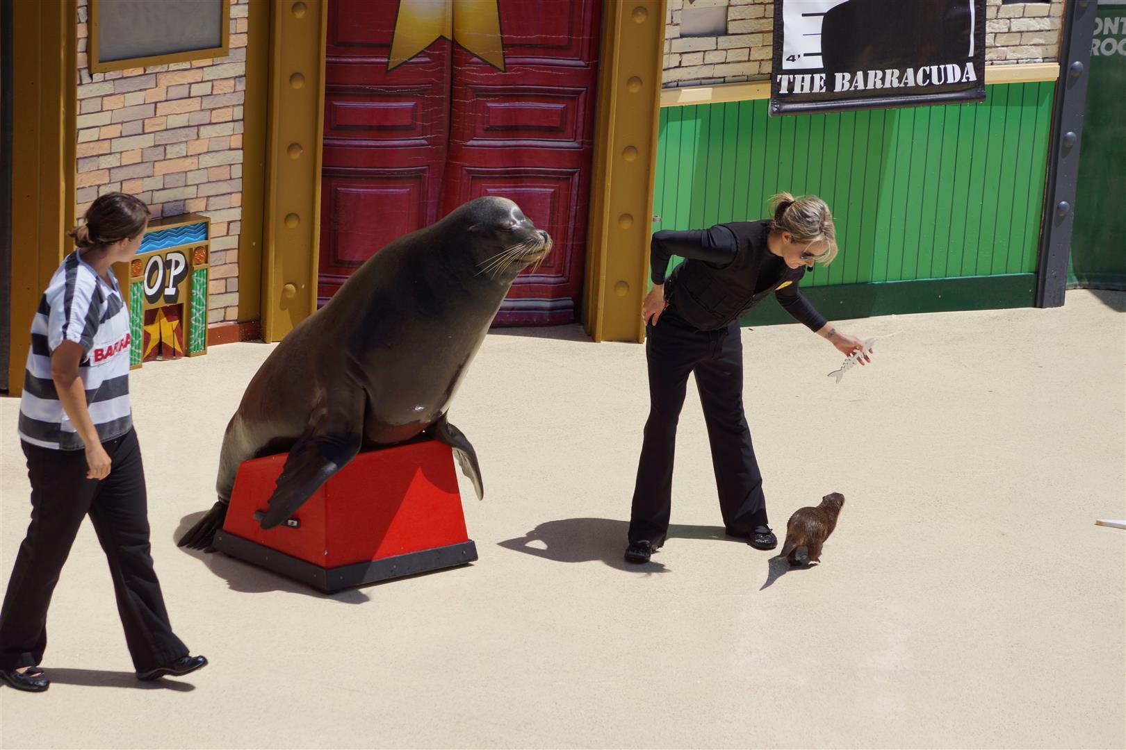 """Baracuda war nicht der Fischdieb, sondern the """"otter"""" guy!"""