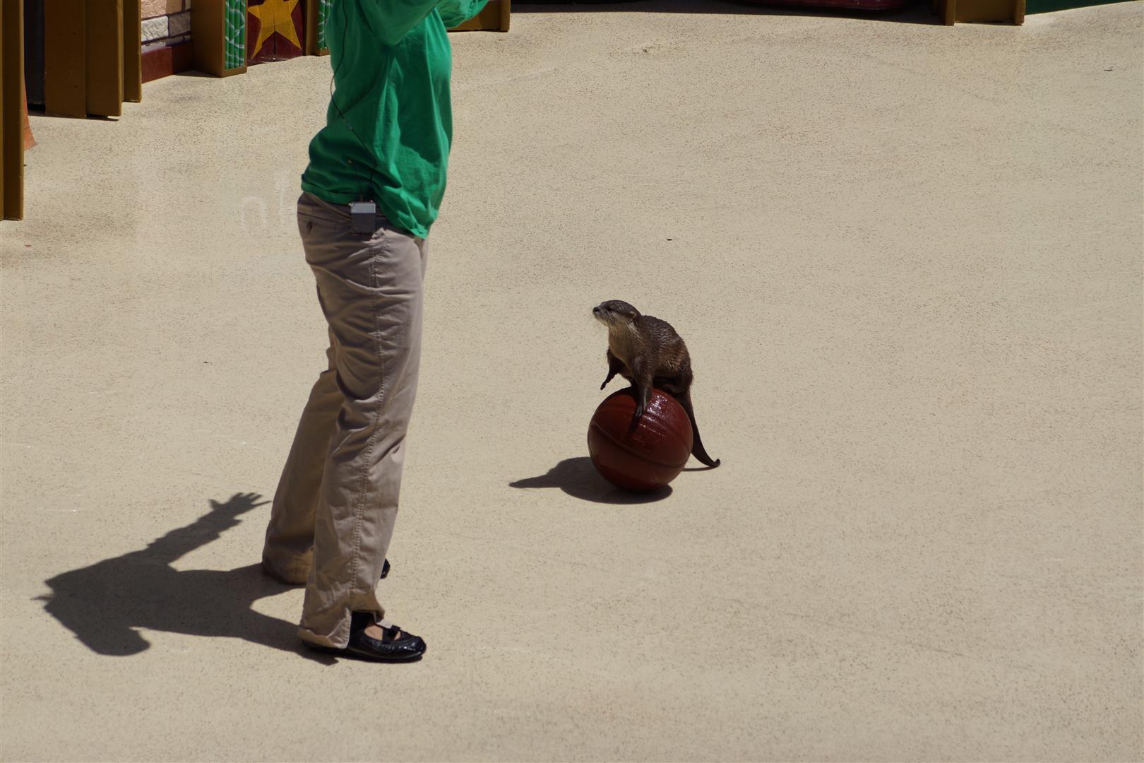 """""""OP Otter"""" oder manche nannten ihn auch den heimlichen Star der Show"""