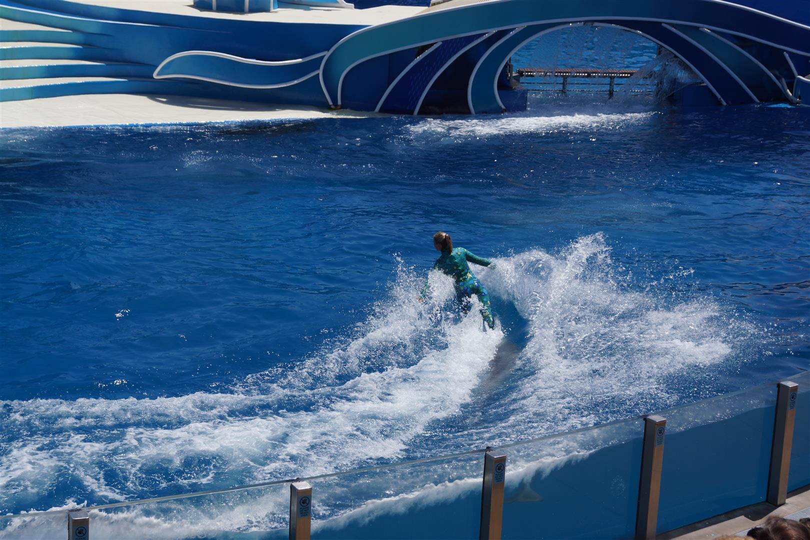 Dolphin-Surfing!