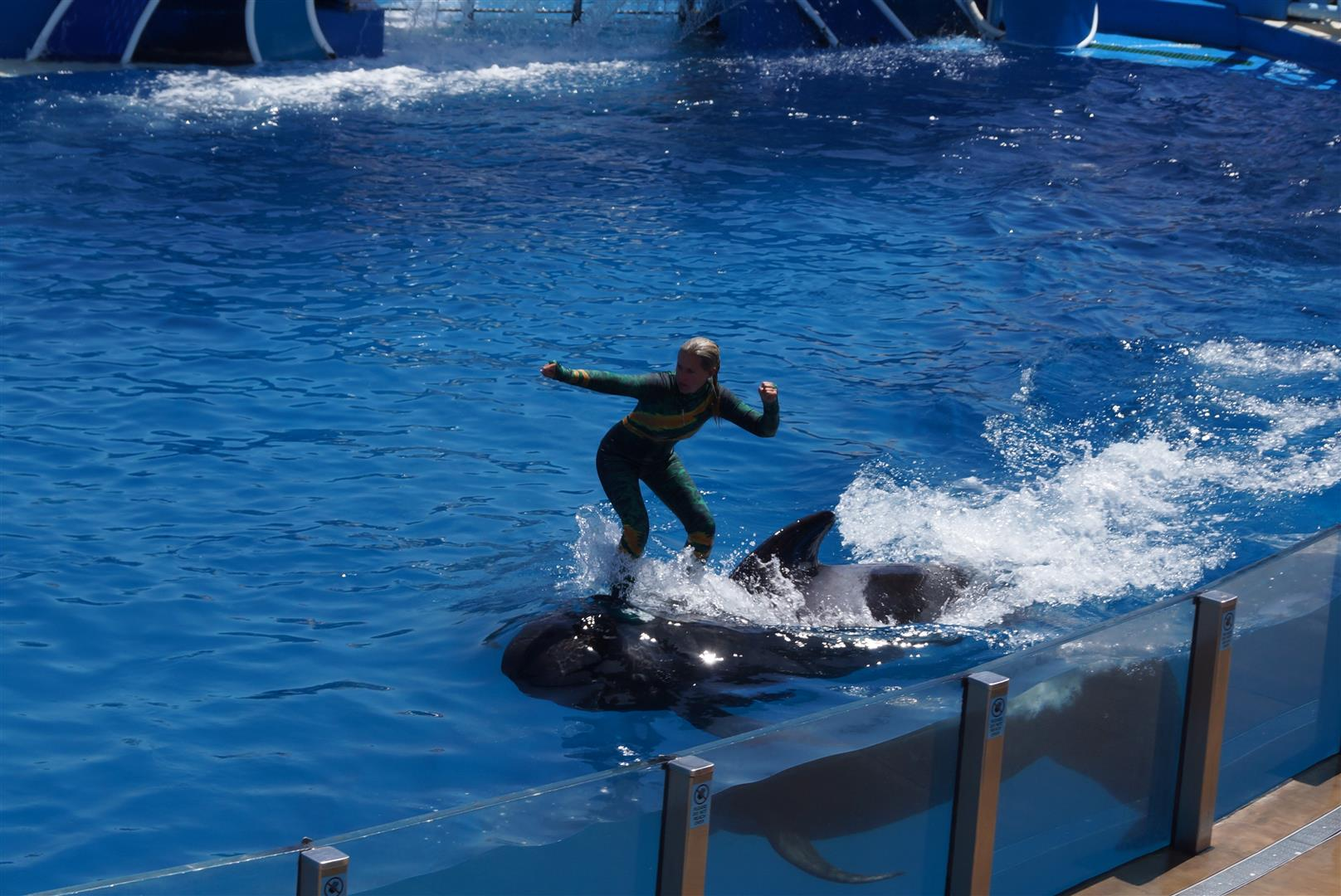 Whale-Surfing!