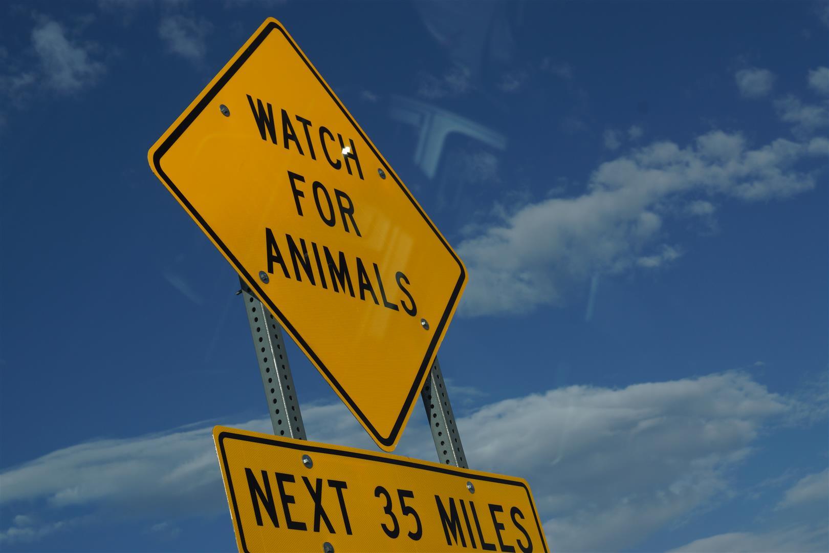 Auf dem Weg nach Young wurden wir schon vor Tieren gewarnt.