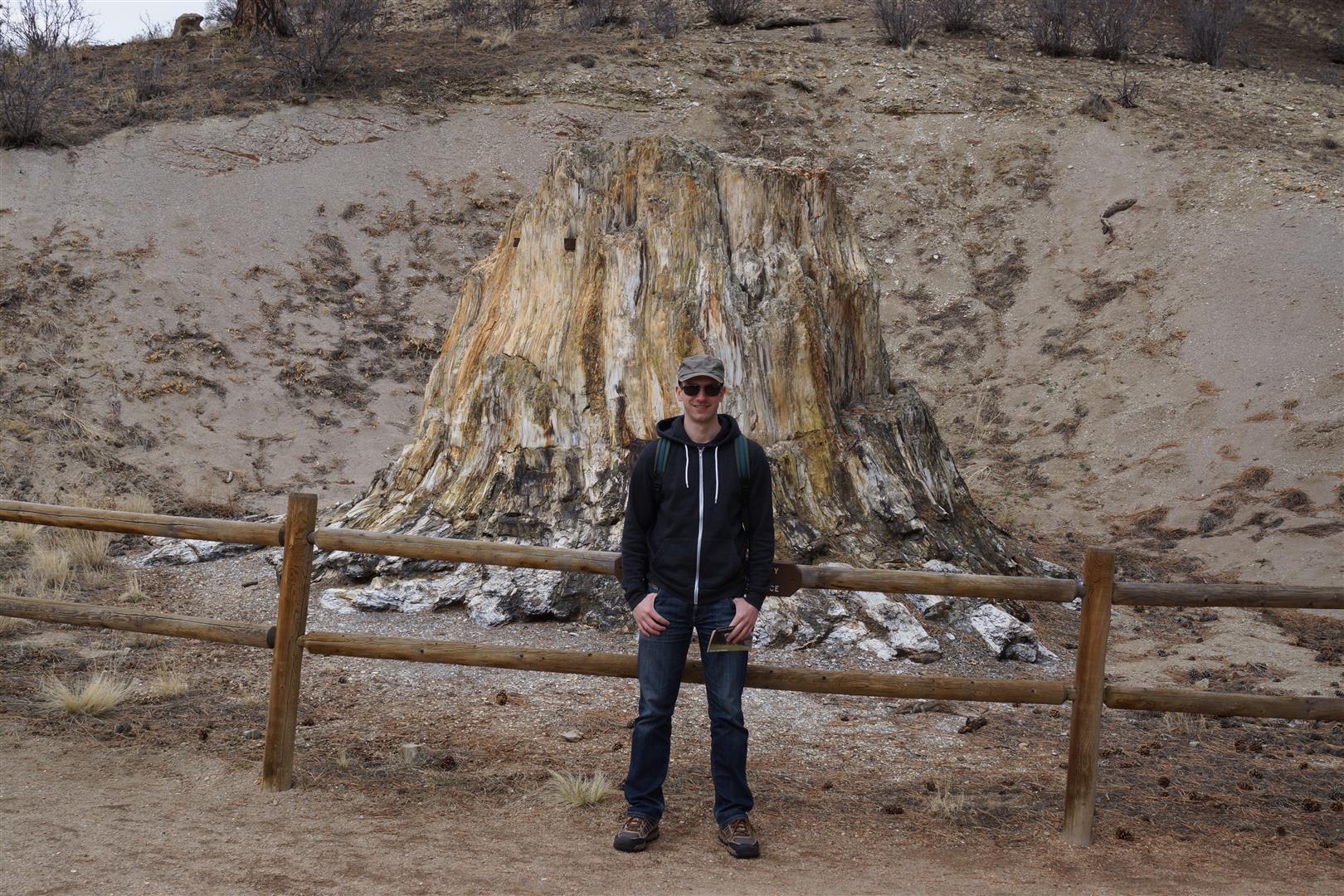 Überreste eines versteinerten Mammutbaumes.