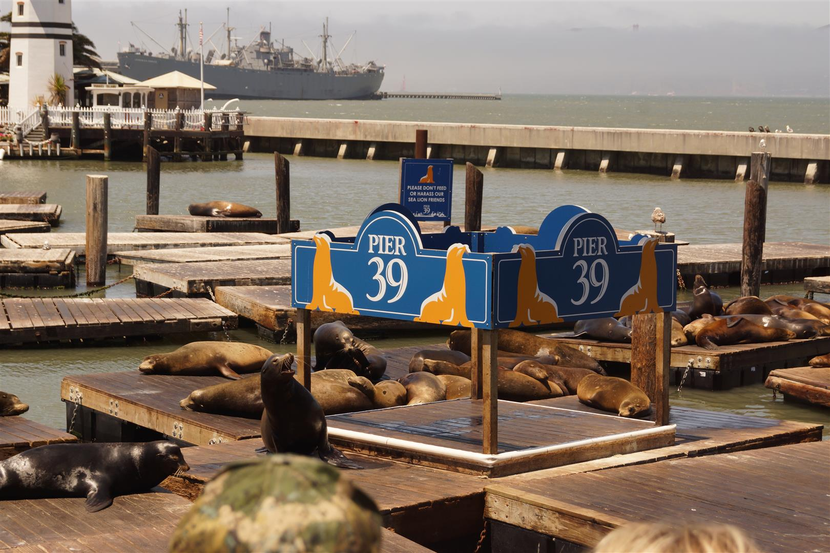 Seelöwen am Pier 39!