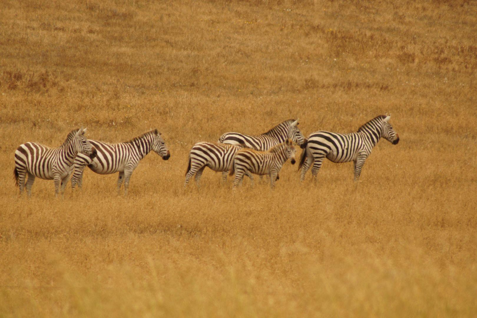 Safari am Straßenrand