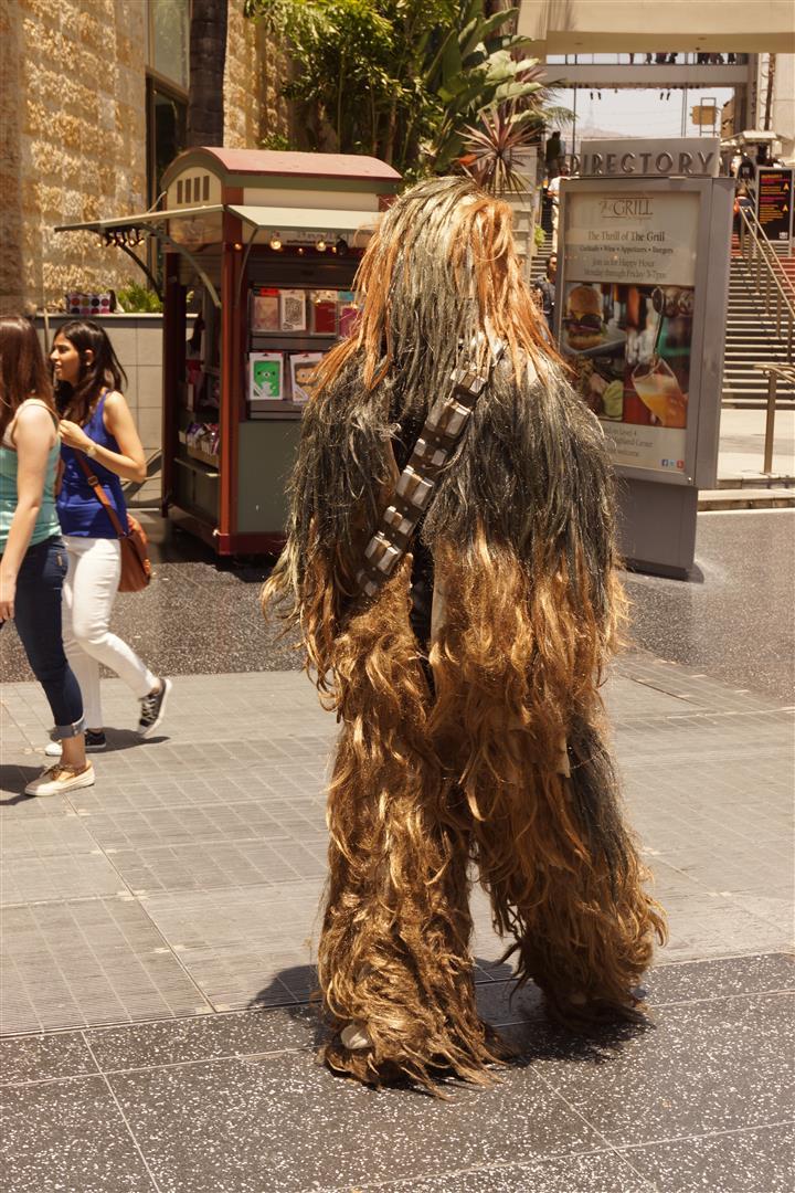 Chewbacca hat sich etwas gehen lassen.