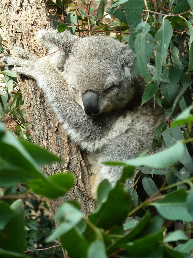 Im WildLife wurde noch seelenruhig Mittagschlaf gehalten.