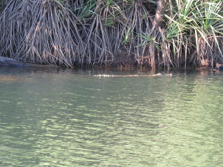 ... und waren vor Krokodilen sicher!