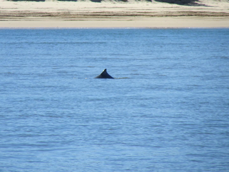 Während der Überfahrt mit der Fähre gab's Delphine zu sehen.