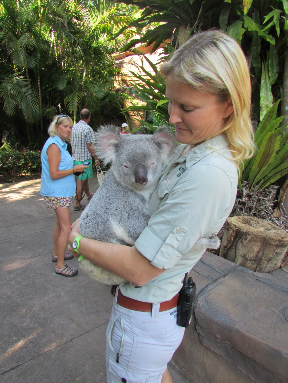Am Eingang wurden wir gleich mal per Koala empfangen.