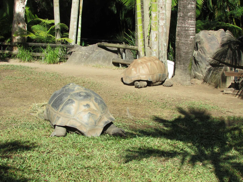 Weiter ging es mit ein paar Kamerascheuen Landschildkröten. (Eventuell war auch einfach nur das Fressen interessanter als die Zuschauer.)