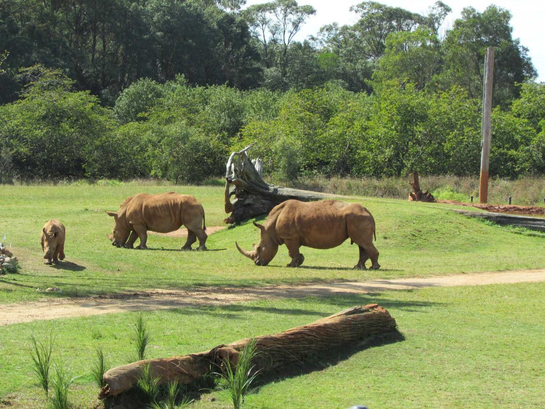 Und ein paar Rhinos...