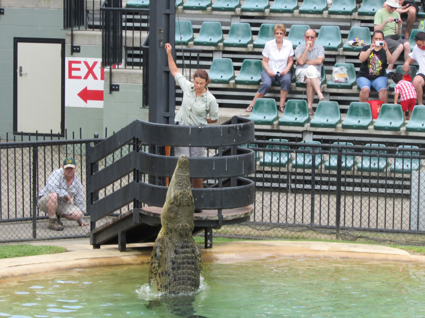 Jumping Crocodile.